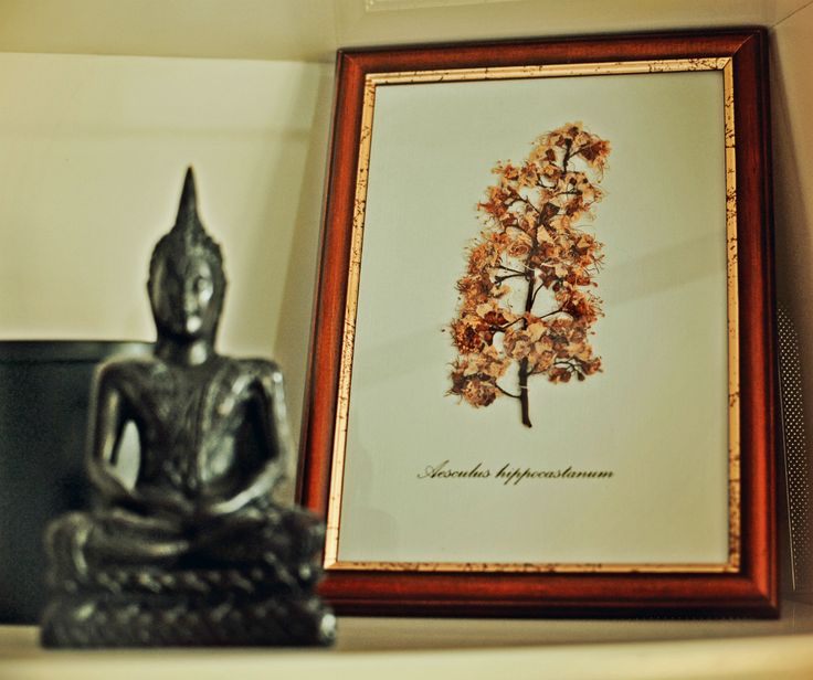 Flora concept with buddha