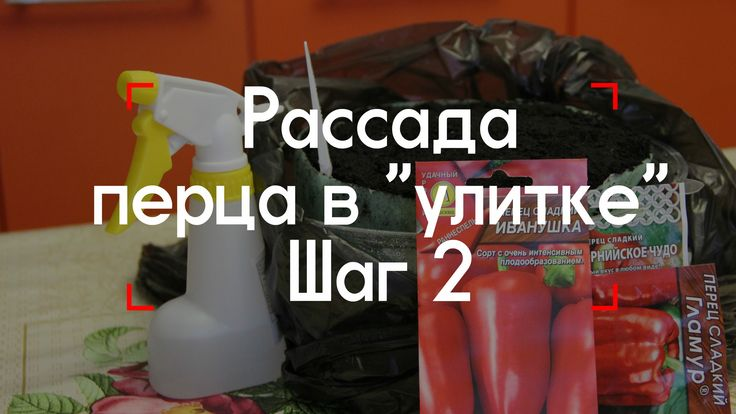 """Рассада перца в """"улитке"""". Шаг 2."""