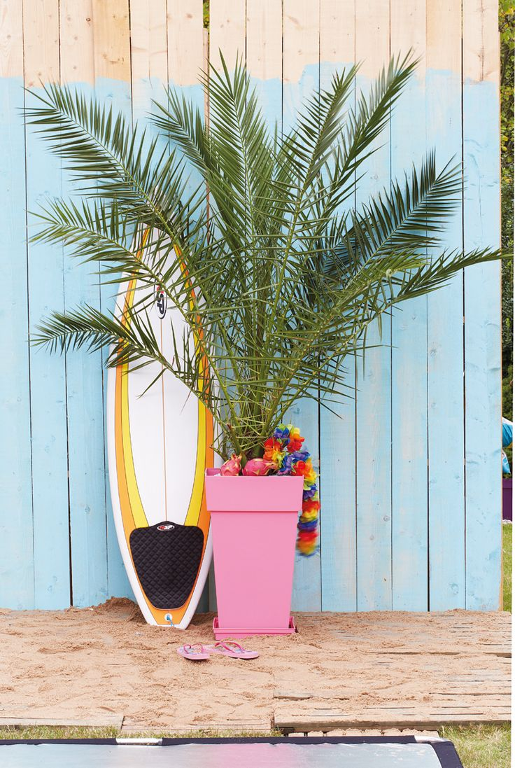 un palmier pour la terrasse un olivier c 39 est bien. Black Bedroom Furniture Sets. Home Design Ideas
