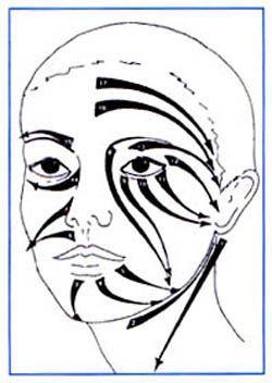 Datos históricos. El DRENAJE LINFATICO MANUAL, es una técnica que se caracteriza por movimientos suaves, lentos, circulares y de arrastre superficial con especial atención al estimulo intensivo…