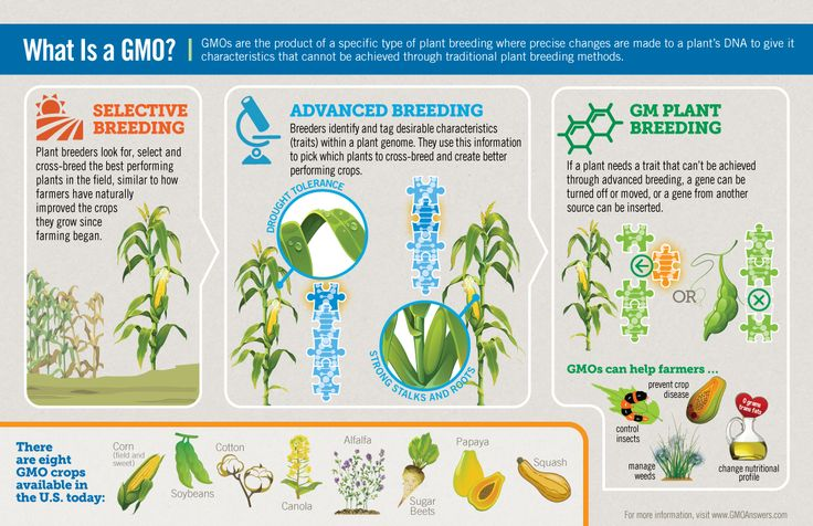 The similarities and differences between genetically modified organism gmo and organic food