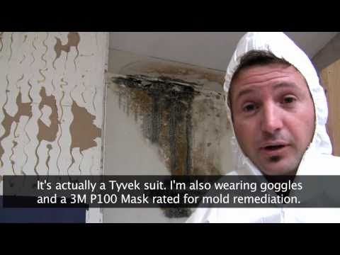 How to Get Rid of Black Mold | Dengarden