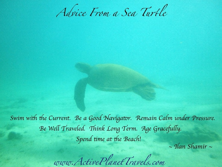 quotes wallpaper sea animals - photo #13