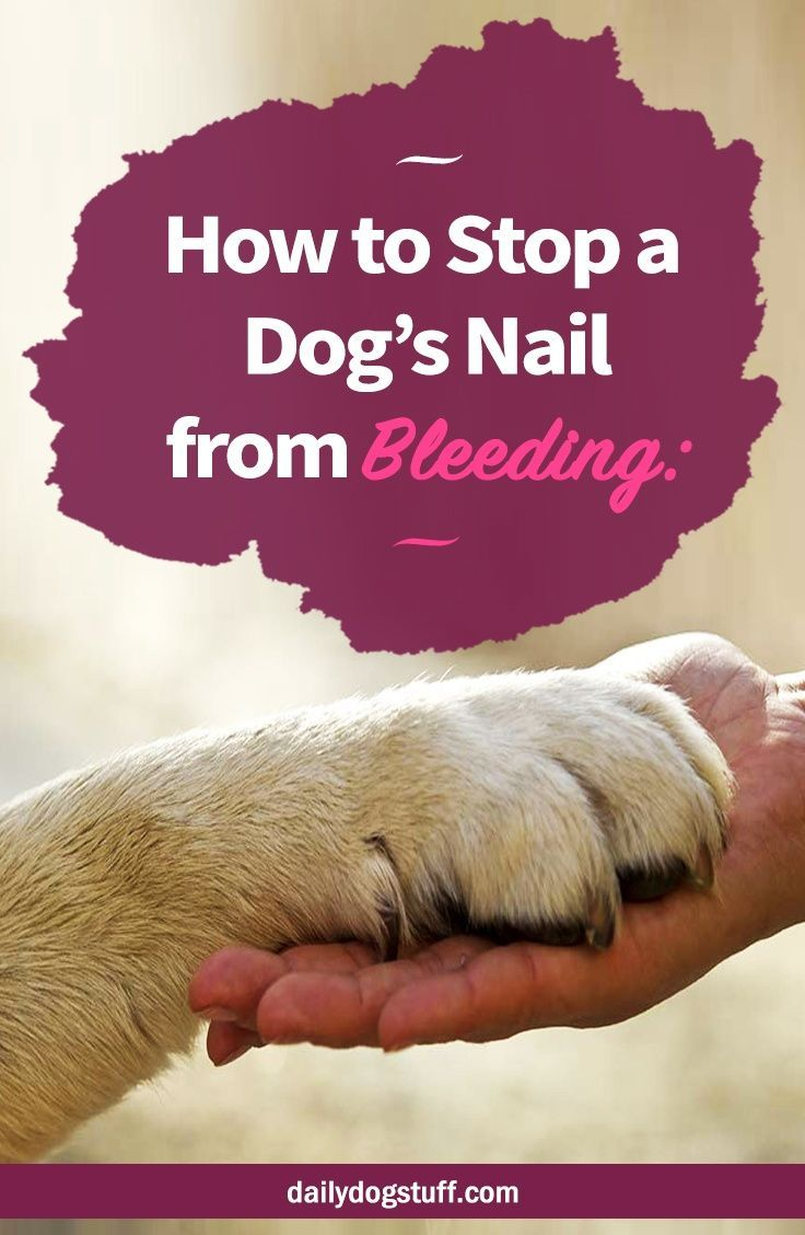 How To Stop A Dog S Nail From Bleeding 6 Home Remedies Dog Nail Bleeding Dog Grooming Dog Nails