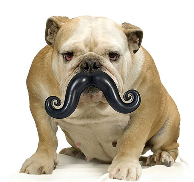 """13.) <a href=""""http://www.awesomeinventions.com/shop/mustache-dog-toy/"""" target=""""_blank"""">Mustache Dog Toy</a>"""