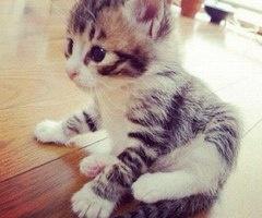 cat cute amazing beautiful perfect - inspiring picture on Favim.com