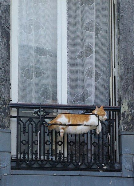 Instead of flowers in window boxes, try cats. They do need to be fed and watered every day:)