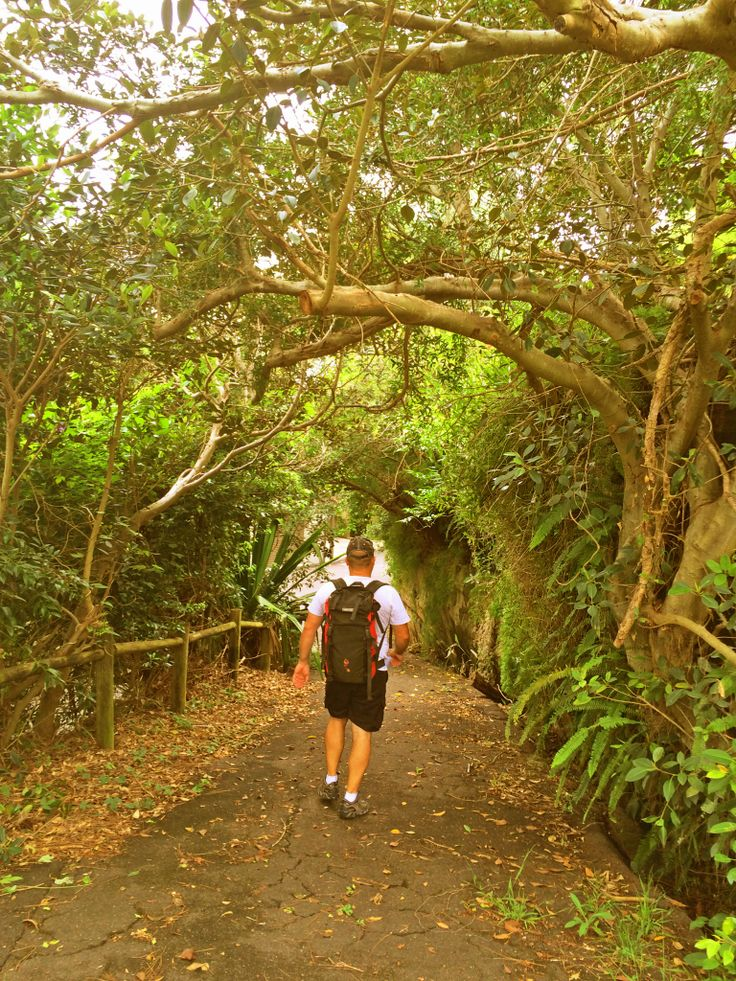 The Great North Walk - Sydney to Newcastle; Woolwich path way & trails; hiking