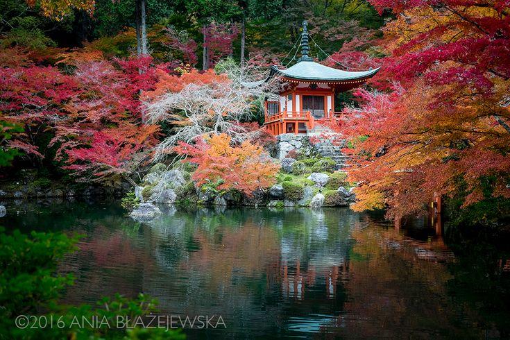 Kōyō, czyli kolory japońskiej jesieni 🍁🍂🍁🍂 [DUŻE ZDJĘCIA]   wAzji.pl - Blog Nie Tylko Fotograficzny