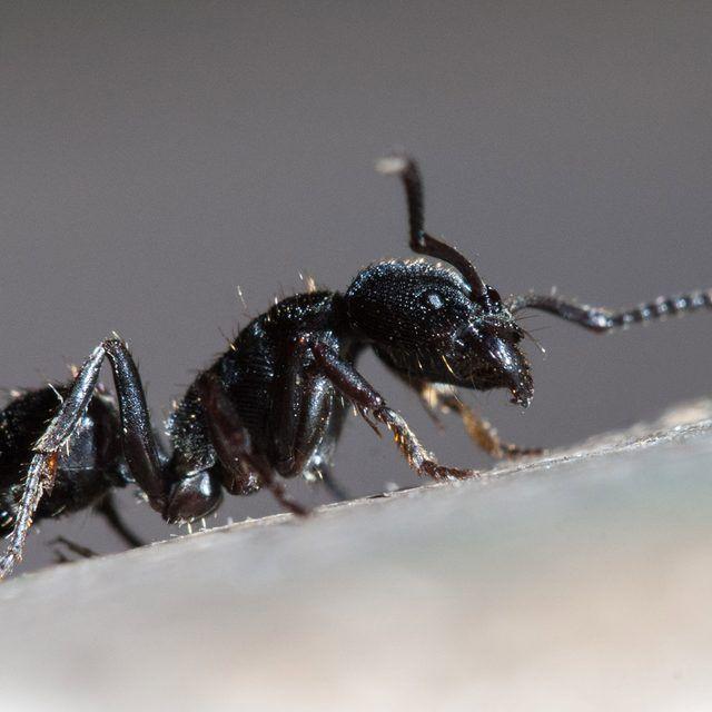 Rid of piss ants, teen ass jpg