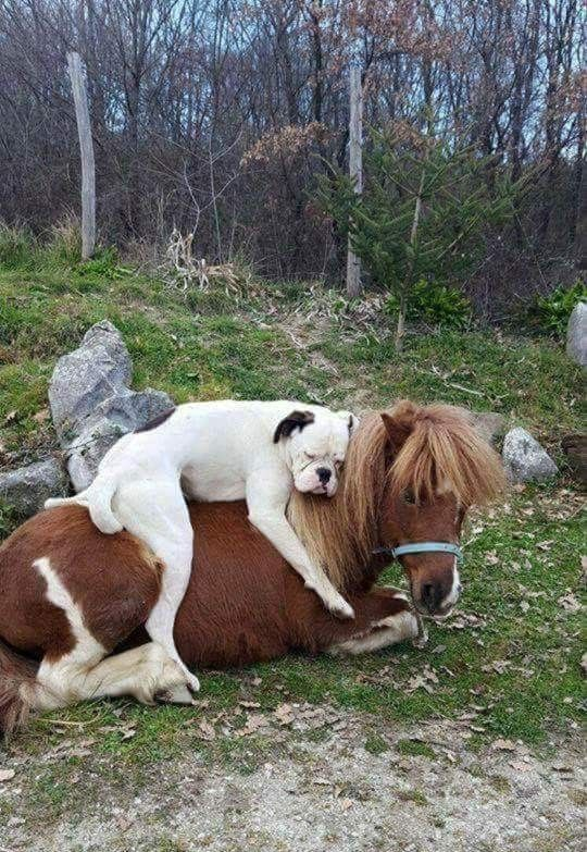 Love and trust – Sweet animals – #ANIMALS #Love #sweet #and #confidence