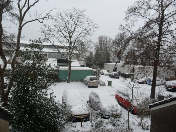 24 januari 2015 rechtse boom