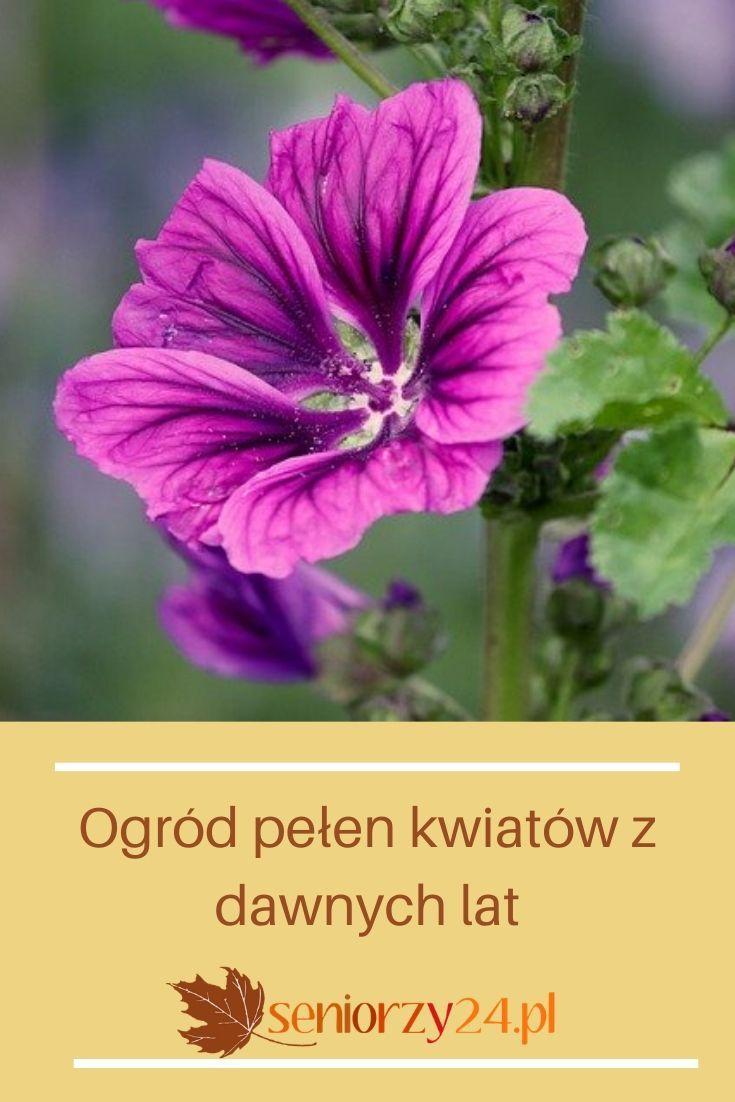 Kwiaty Do Ogrodu Garden