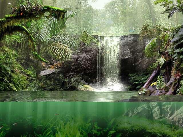 Tropischer Regenwald Tiere Wallpaper - Ich Liebe Wasser