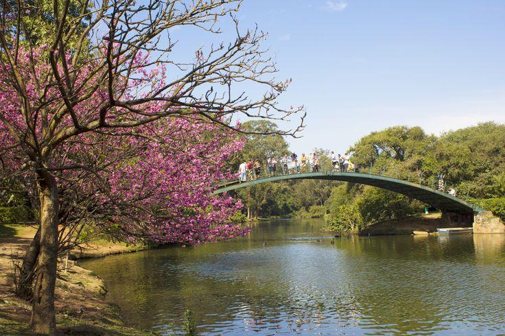O Parque do Ibirapuera é o parque urbano mais importante de São Paulo, e foi inaugurado e.m 1954 para a comemoração dos 400 anos da cidade