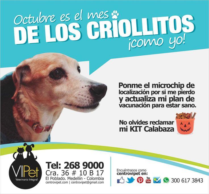 OCTUBRE ES EL MES DE LOS CRIOLLITOS Trae a tu mascota VIPet durante el mes de octubre para que le instalemos el michochip de localización y le actualicemos su plan de vacunación. Mayores informes en el teléfono 268 9000, Medellín - Colombia.