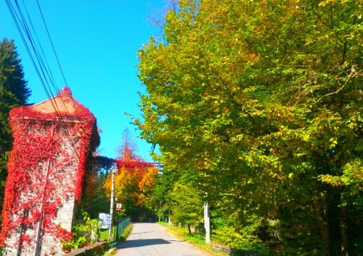 #sinaia#cumpatu#neighbourhood#autumn