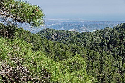Coniferous forests of Cyprus by Natalya Antropova #Cyprus#NatalyaAntropovaFineArtPhotography#ArtDecor#HomeDecor#Travel