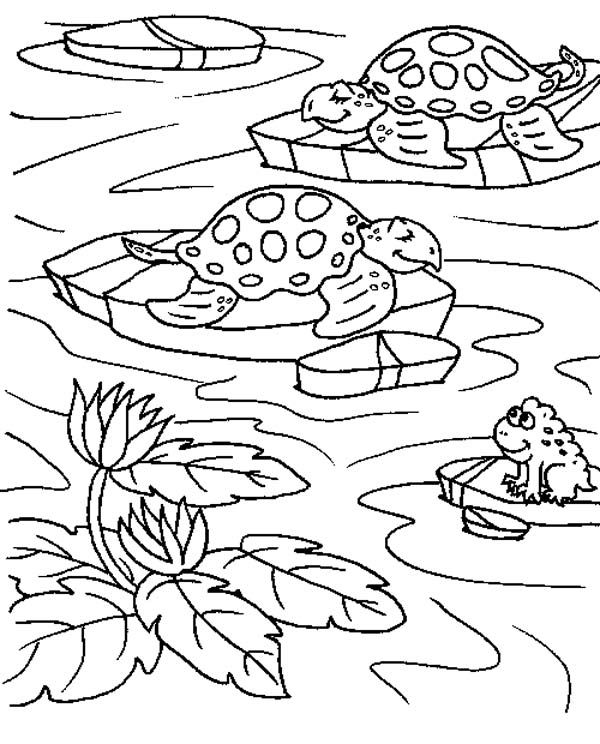 free pond coloring pages | Sea Turtle in a Ponds With a Frog Coloring Page | Frog ...