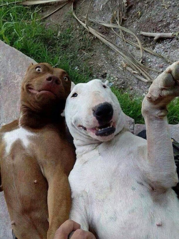 Image result for Derp Dogs