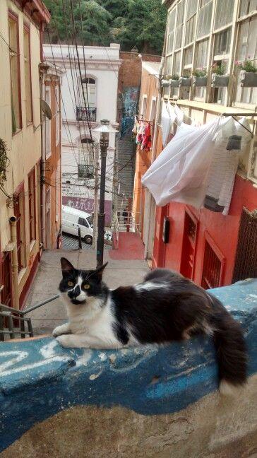 Gato en Valparaiso
