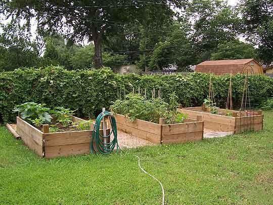 Fall Garden Ideas In Texas Photograph North Central Texas