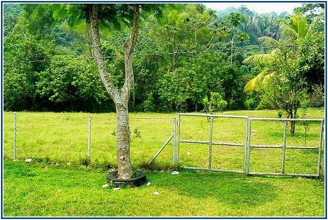 Supernormal Black Locust Fence Posts For Sale