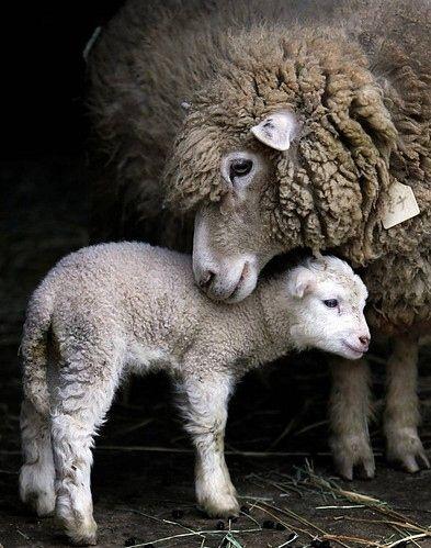 animal, animals, baby, baby animals, beautiful
