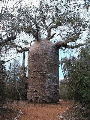 Shuttle-Tree
