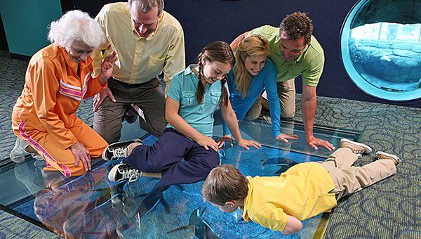 Family Camps at Ripley's Gatlinburg Aquarium | Ripley's Aquarium of the Smokies