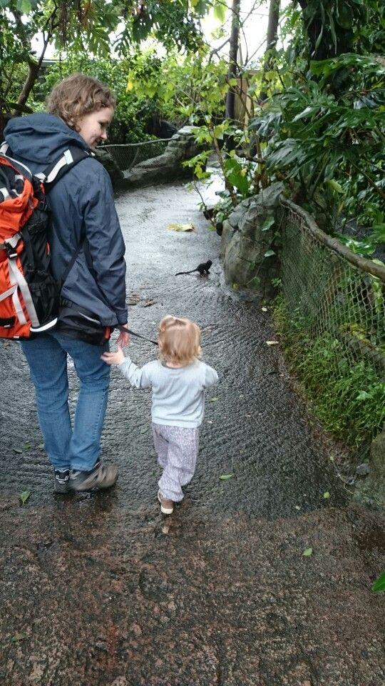 En tur i Randers regnskov