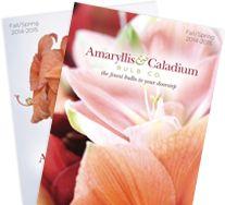 amaryllis planting info, care & free catalog