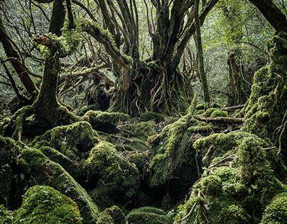 Yakushima - The Forest Spirit #behance #design @GoaShape