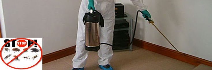Back 2 New Cleaning delivers flawless #pestcontrol #solutions to give you complete peace of mind.
