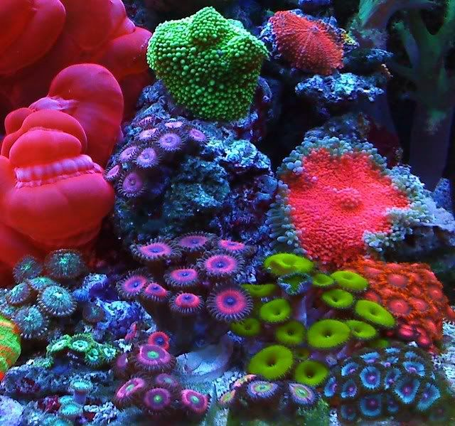 Acans must be coral and other sessile oragnisms. Here they are glowing in the dark, almost.