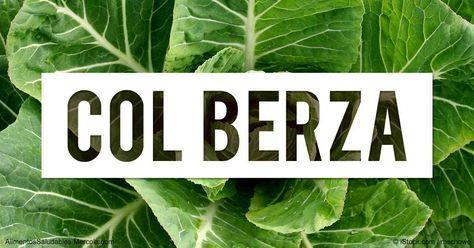 Aprenda más sobre el valor nutricional de la col berza, beneficios de salud, recetas, y otros datos curiosos para enriquecer su alimentación. http://alimentossaludables.mercola.com/col-berza.html