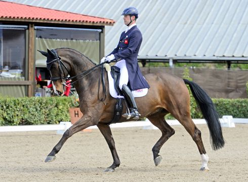 spencer wilton dressage - Google Search