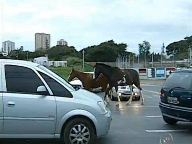 20 fatos do trânsito de Sorocaba que te deixarão maluco - Matérias - Portal Sorocaba.Com