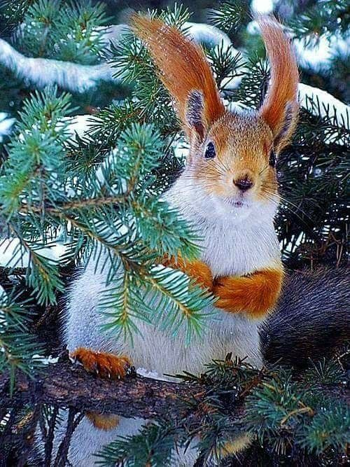 775 best Squirrels and Chipmunks, so cute. images on Pinterest | Red ...