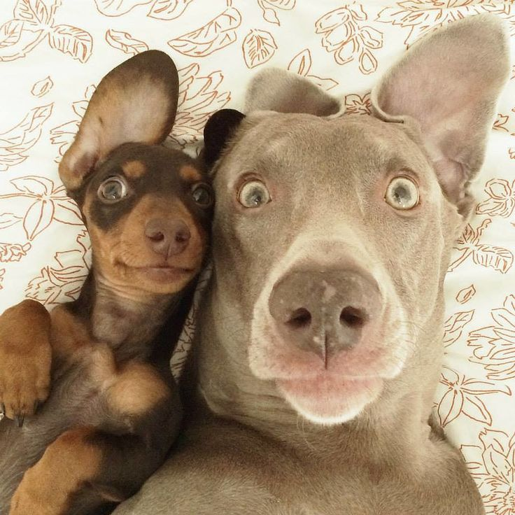 "21 Animal Selfies That Are Shutting It Down ""Make a Silly Face"""