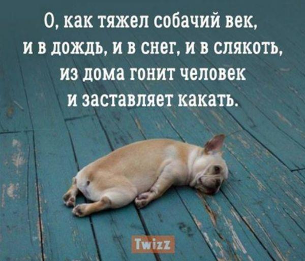 Сложны отношения с собакой, но прогресс имеется...: sestratk