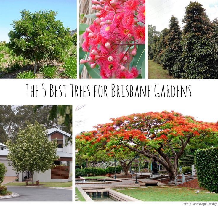 the 5 best trees for brisbane gardens - Garden Ideas Brisbane