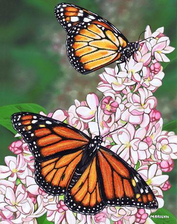 MARILYN BARKHOUSE Monarch Butterfly