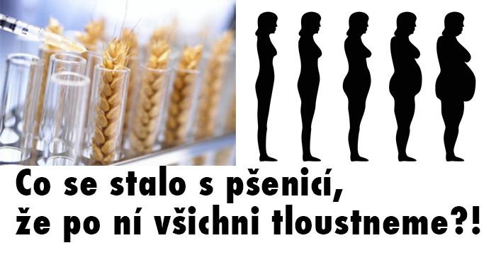 Pšenice, lepek, alergie