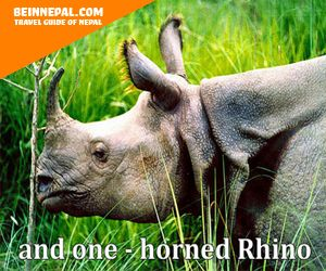 and one - horned rhino