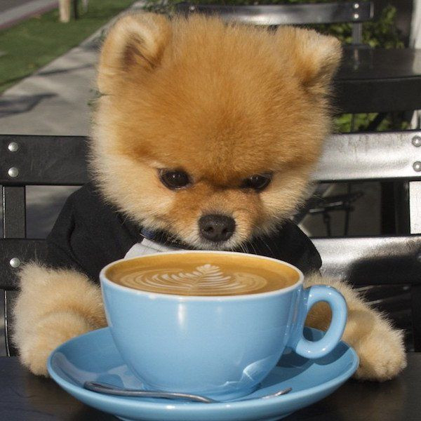 Best Jiff The Dog On YouTube Images On Pinterest Pomeranians - Jiff the pomeranian is easily the best dressed model on instagram