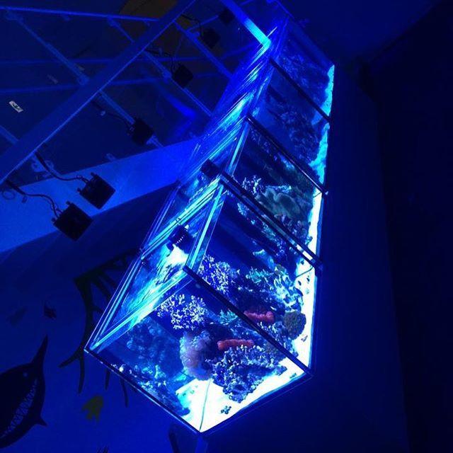 【cotup】さんのInstagramをピンしています。 《a.m.p aquarium tank 900x600x600 OF 2台 600x600x600 OF 2台 Neon Wave 様  #アクアリウム #ガラス水槽 #amp #オーバーフロー #オーダーメイド #海水魚 #サンゴ #コットアップ #水槽 #インテリア #ミドリイシ #水族館 #大型水槽 #海水水槽 #マメスナ #イソギンチャク #neowave #sps #海水魚水槽 #水草水槽 #レイアウト水槽 #魚 #熱帯魚 #coraltank #reeftank #リーフタンク》