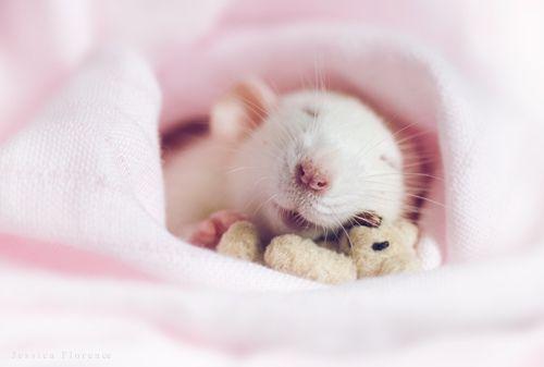:-)   Flickr - Photo Sharing!