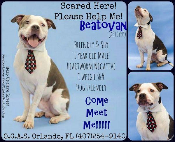 Dog Adoption Shelters In Orlando Fl
