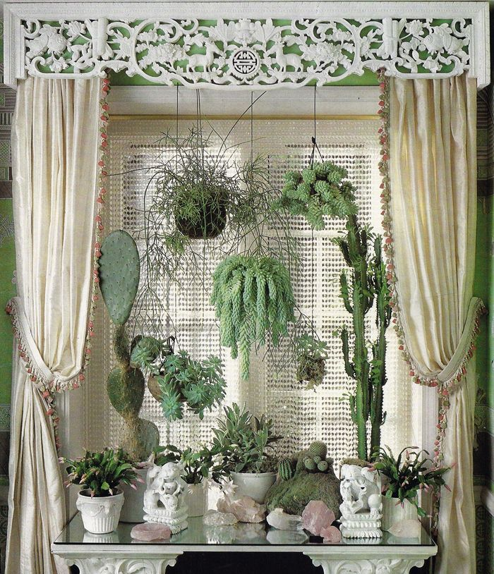 Beautiful houseplant collection